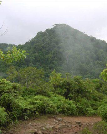 Photo of the Sinharaja Rainforest, Sri Lanka by Luke Broom Gillett