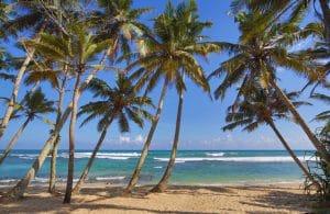 Beach gen vert